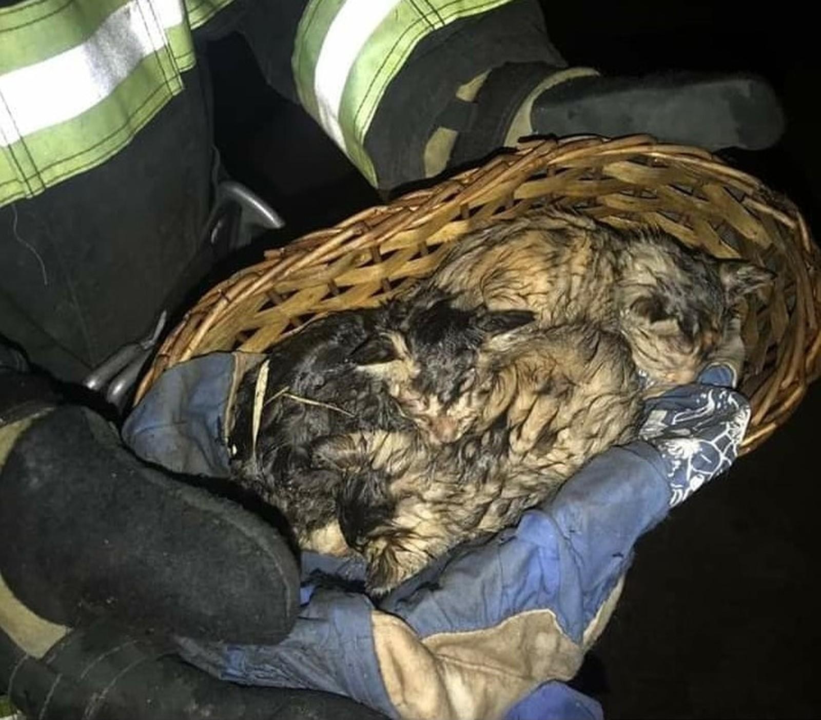 Bombeiros resgatam três gatos de casa que pegou fogo em Paraguaçu Paulista — Foto: Corpo de Bombeiros/Divulgação