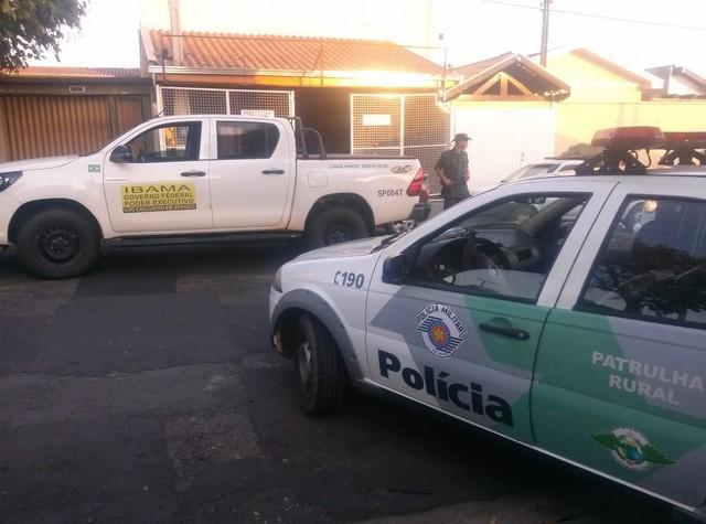 Agentes chegaram na casa após denúncia de que jovem receberia iguanas pelos Correios em Limeira — Foto: Polícia Ambiental