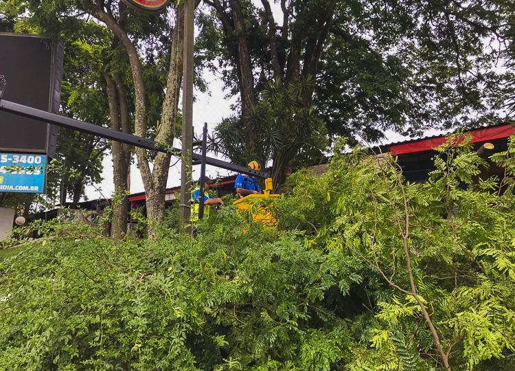 Prefeitura realiza poda de árvores no Camelódromo — Foto: Divulgação/Prefeitura Municipal de Assis