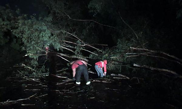 Temporal derruba árvores e interdita rodovia em Palmital — Foto: O Diário do Vale