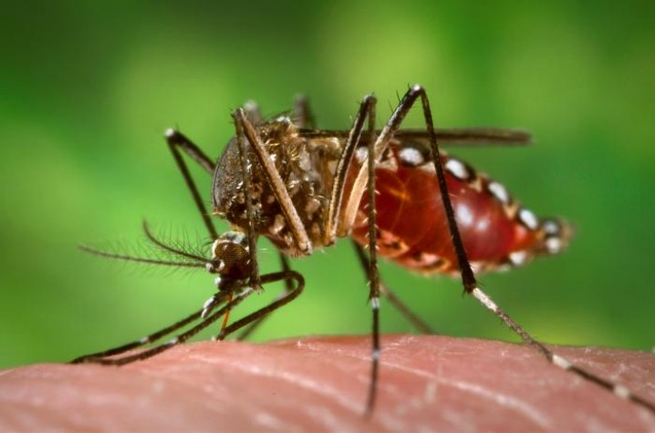 Ao menos 16 casos de dengue foram registrados desde julho em Assis — Foto: Divulgação
