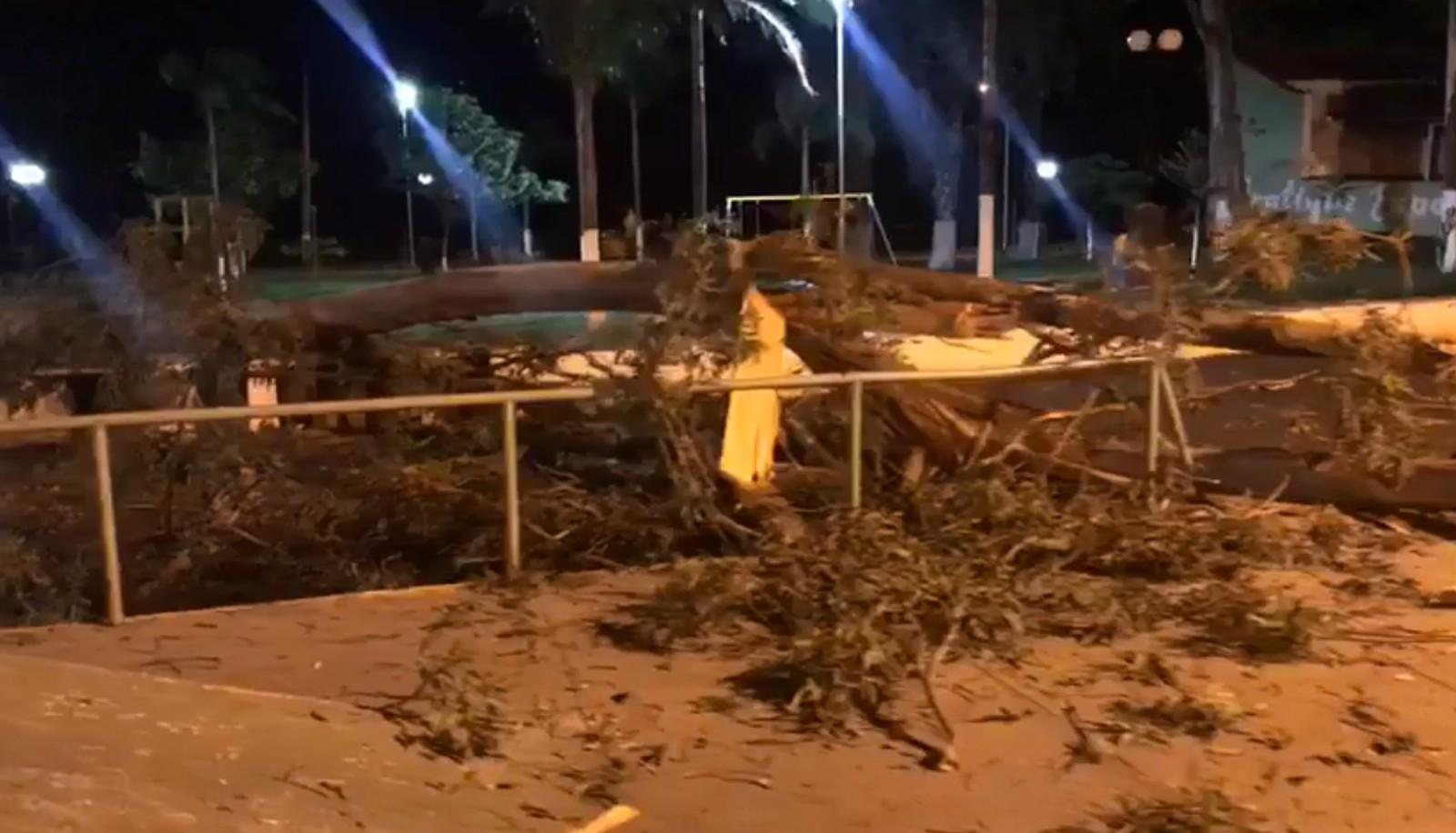 Adolescente morre depois de ser atingido por galho de árvore em Quintana (SP) — Foto: Arquivo Pessoal