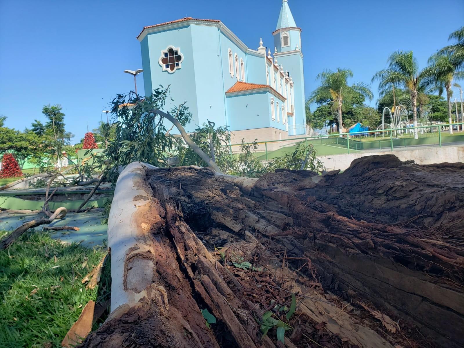 Segundo moradores, árvore tinha cupins em Quintana — Foto: Cláudio Farneres / TV TEM