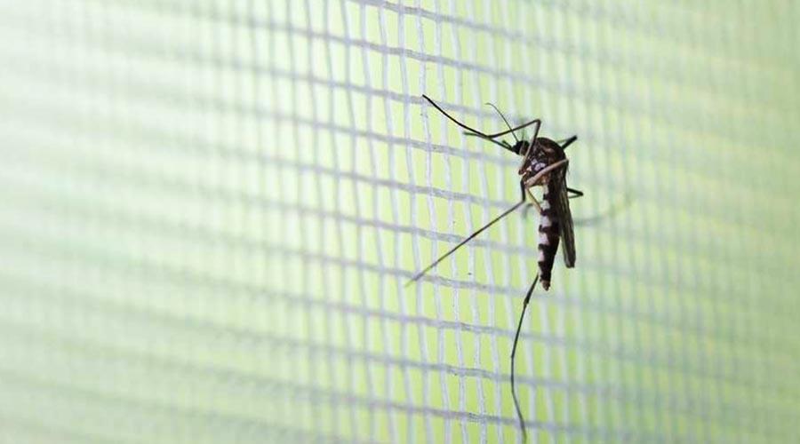 Paraguaçu Paulista tem, de janeiro até o dia 27 de fevereiro, 320 notificações de casos de dengue, sendo 77 positivos e 104 negativos para a doença. Os outros 139 casos são suspeitos e estão em investigação, de acordo com a informação da Vigilância Municipal em Saúde de Paraguaçu Paulista, do Departamento de Saúde (Foto: Getty Images via BBC)
