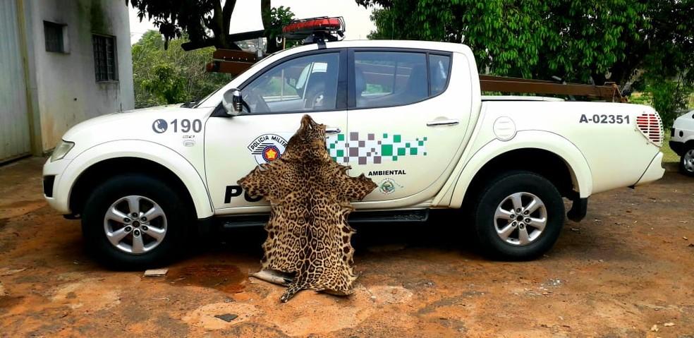 Couro de onça-pintada foi apreendido em Álvares Machado — Foto: Polícia Militar Ambiental